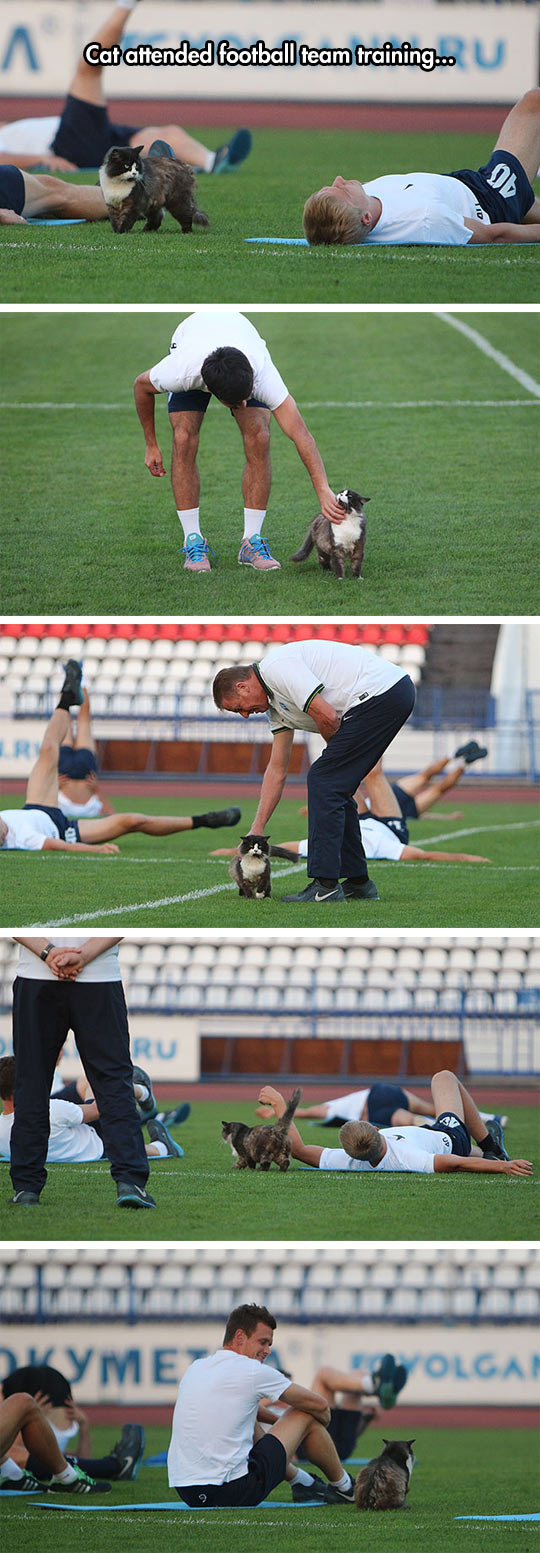 funny-cat-attended-football-team-game-field