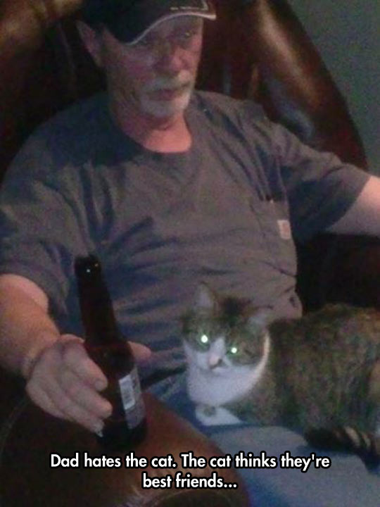 funny-cat-dad-beer-sitting-lap