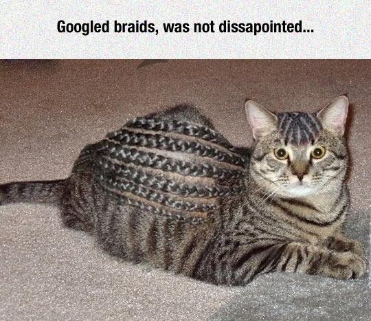 funny-cat-floor-hair-braids