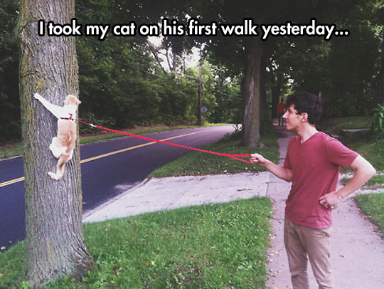 funny-cat-leash-walking-owner