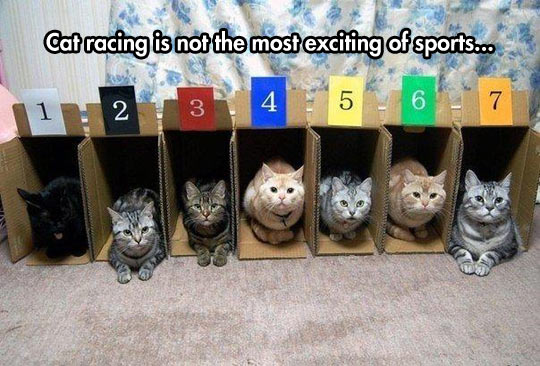 Cat Racing Is Not That Amazing