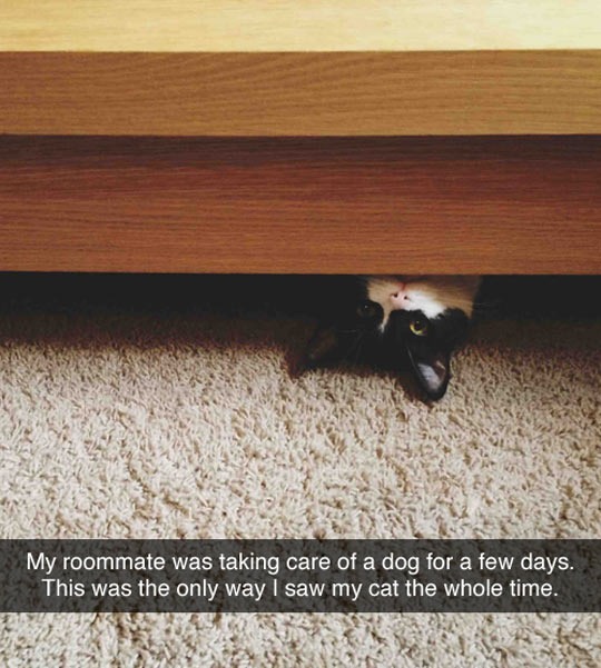 Cat Ain