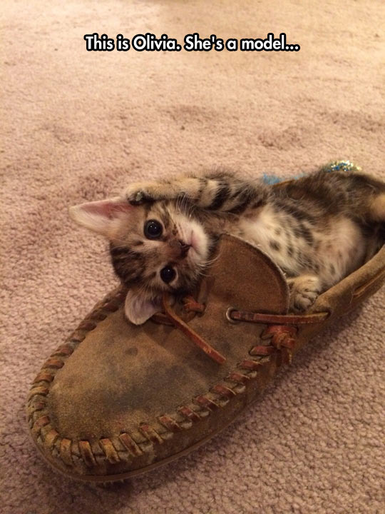 funny-cat-shoe-cute-posing