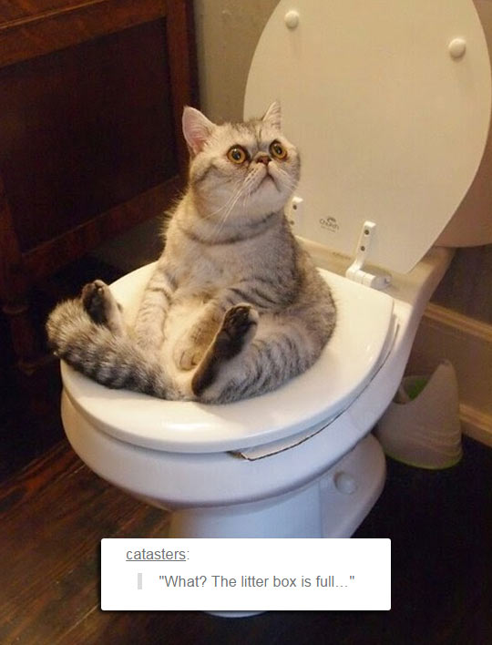 funny-cat-using-toilet-surprised-face