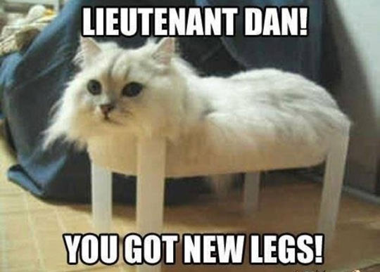 funny-cat-wood-legs-bed