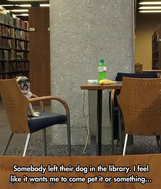 funny-cute-dog-library-sitting