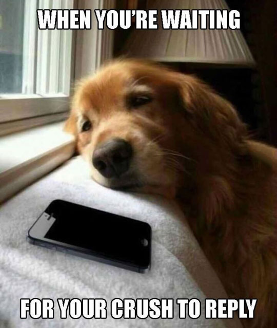 funny-cute-dog-looking-iPhone