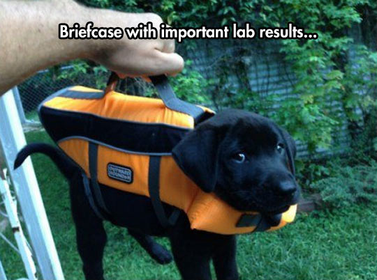 funny-dog-briefcase-suit-hand