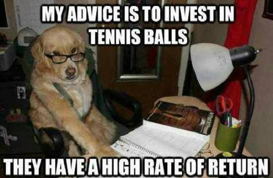 funny-dog-business-advice-tennis-balls