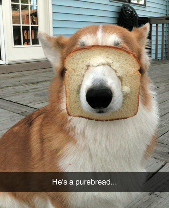 He Looks Inbred To Me