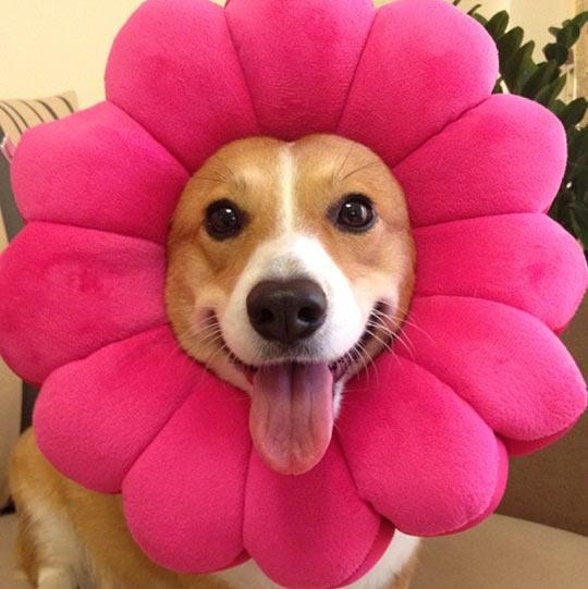 funny-dog-costume-flower-pink