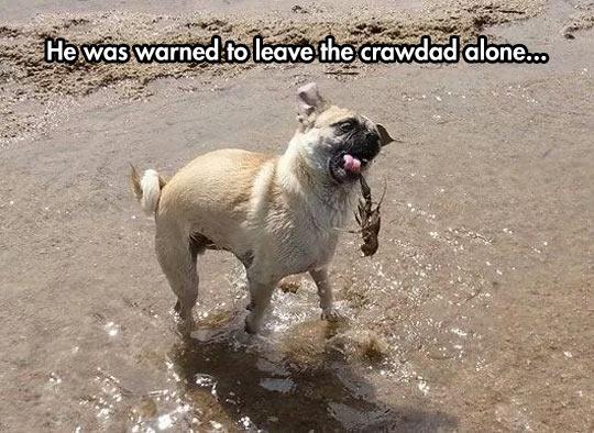 funny-dog-crawdad-river
