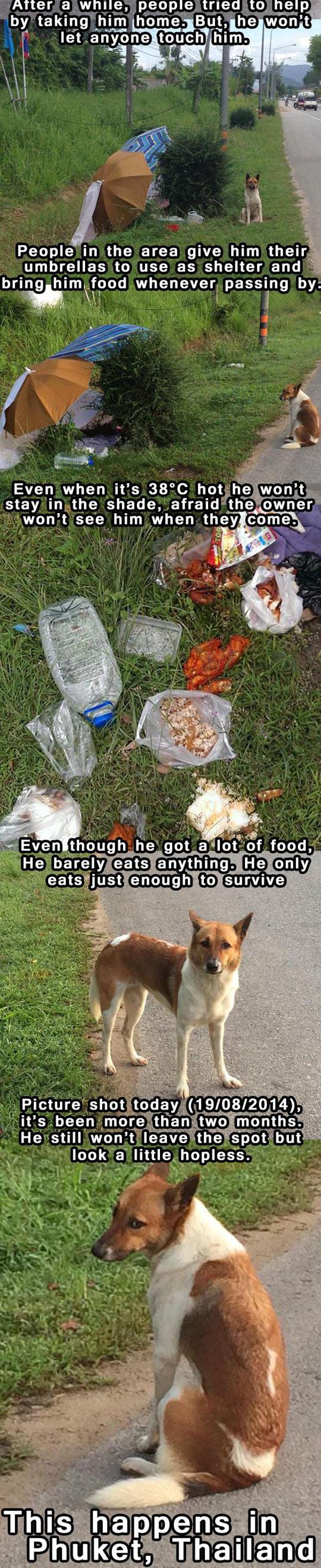 funny-dog-dumped-aside-road-umbrella-shelter-waiting