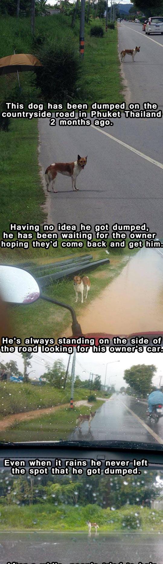 funny-dog-dumped-aside-road-umbrella-shelter