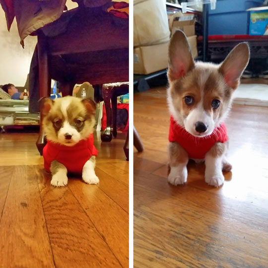 funny-dog-growing-clothes