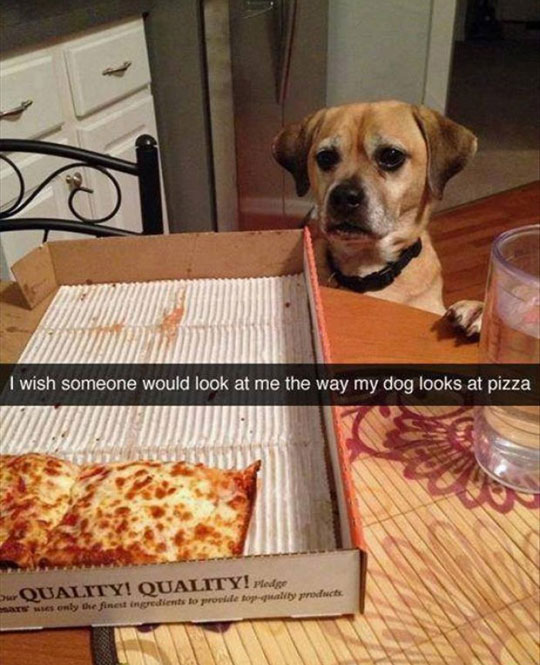 funny-dog-looking-pizza-love