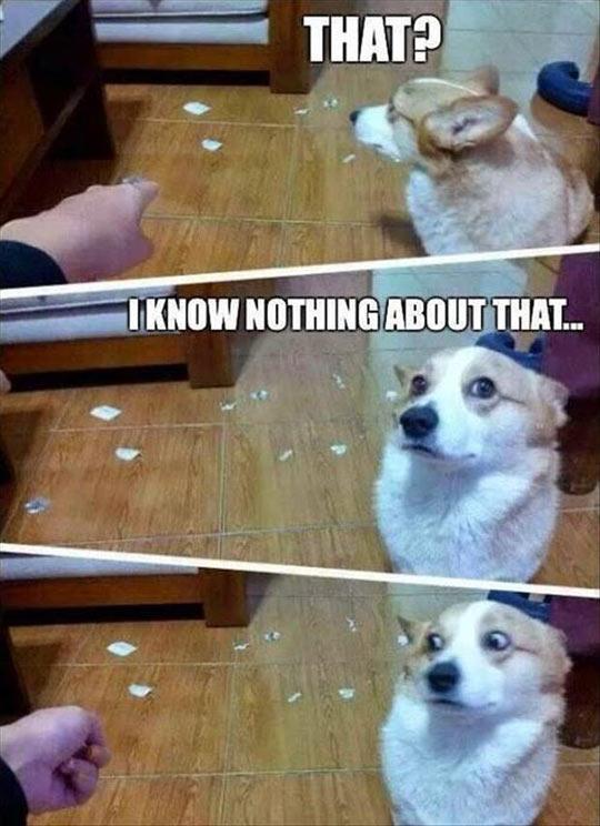 Deny Everything, Dog