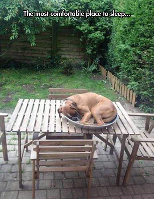 funny-dog-plate-table-chair-sleeping