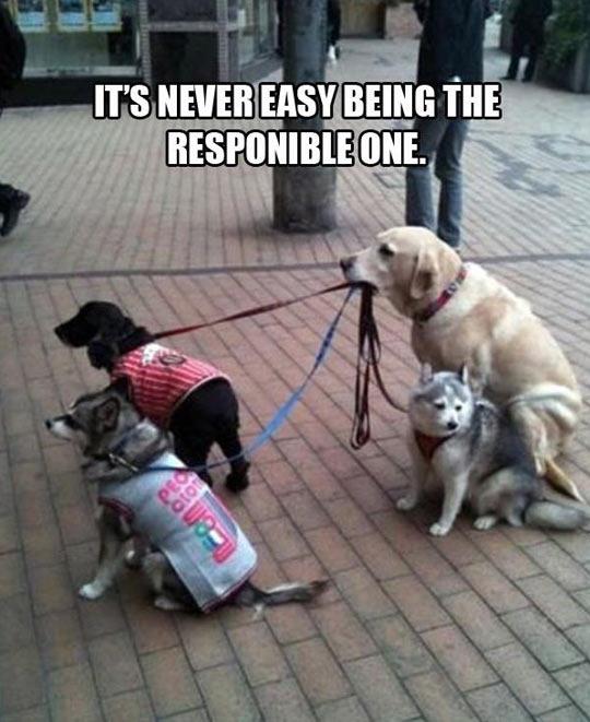funny-dog-puppy-leash-street