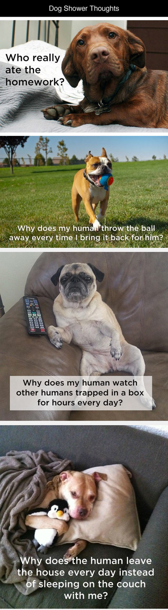funny-dog-shower-thoughts-homework-ball