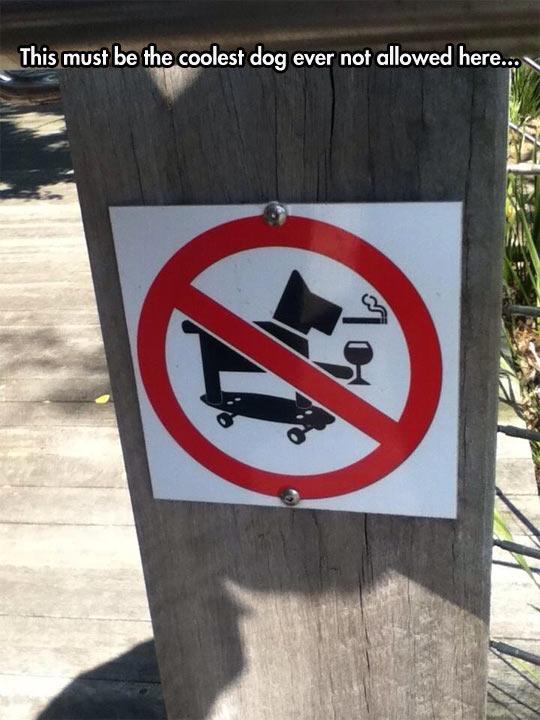 funny-dog-skater-smoking-drinking-prohibited