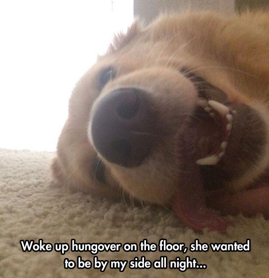 Dogs Love Sleepovers