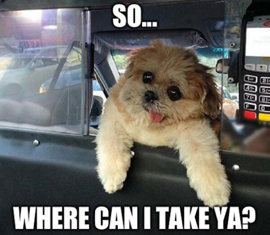 Derp Dog Taxi Driver