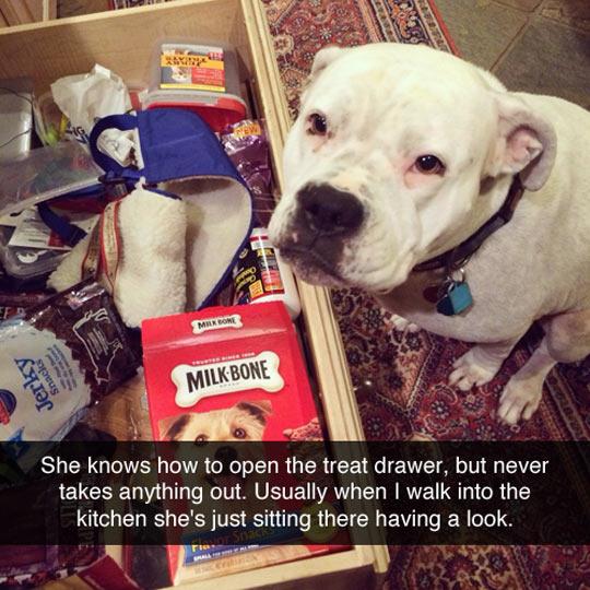 funny-dog-treat-drawer-kitchen