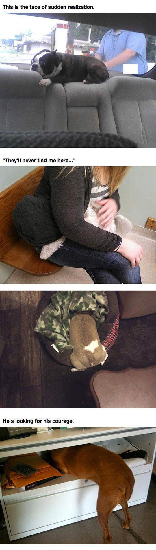 When Pets Realize They