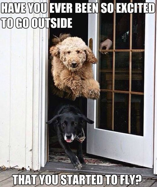 funny-dogs-going-outside-flying