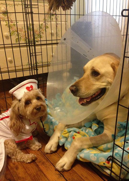funny-dogs-nurse-cone-love