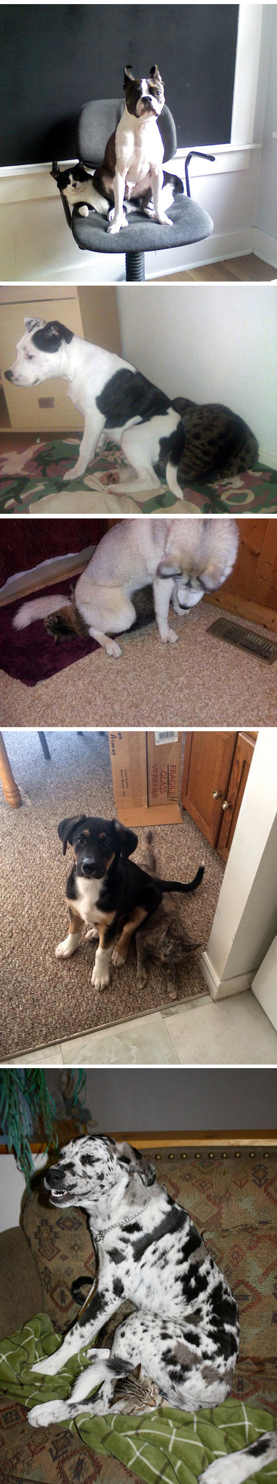 funny-dogs-sitting-cats-couch-park-annoying