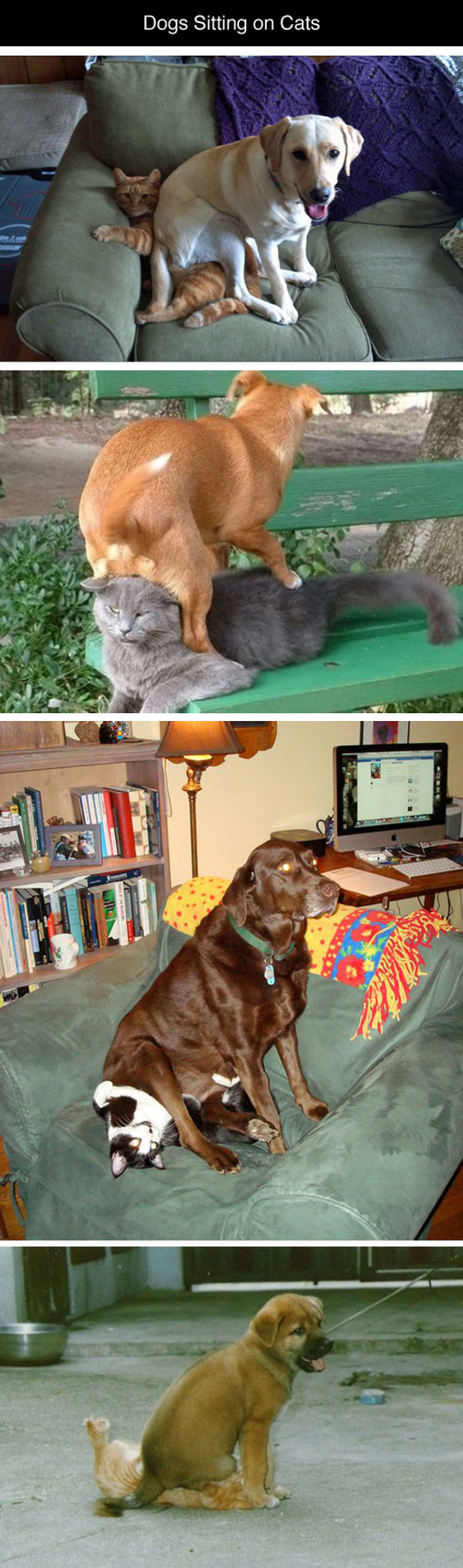 funny-dogs-sitting-cats-couch-park