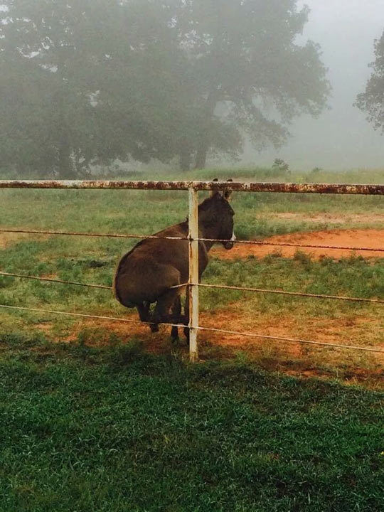 Donkey On A Fence