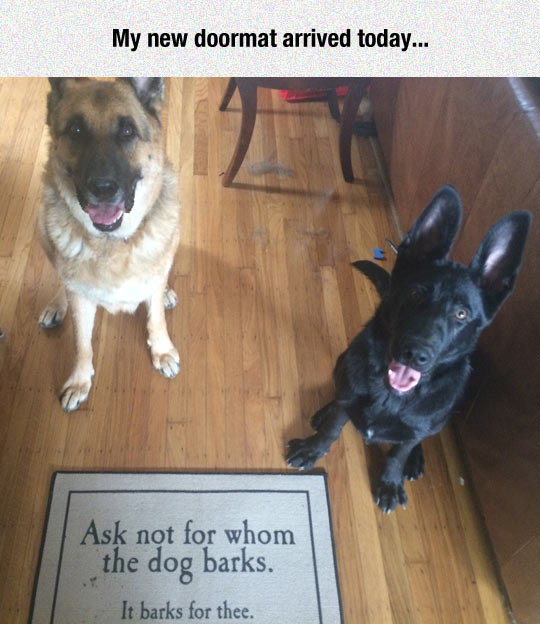 funny-doormat-dogs-quote