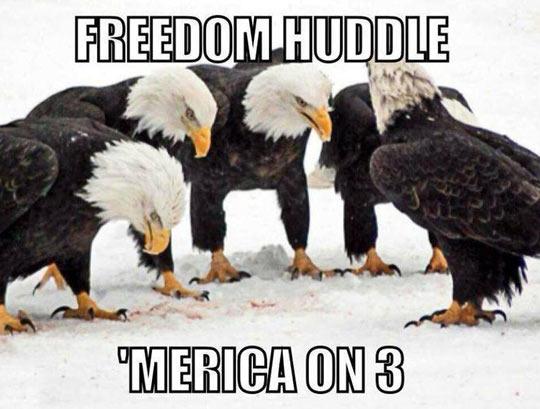 The Freedom Huddle