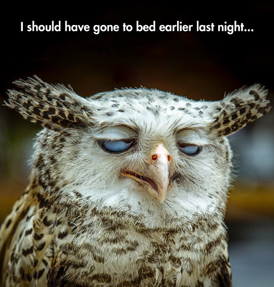 funny-face-eyes-owl-sleepy