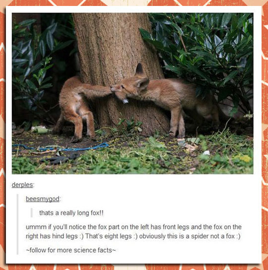 funny-fox-biting-tail-forest-tree-definition