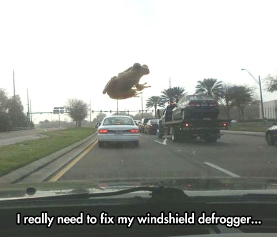 funny-frog-windshield-car