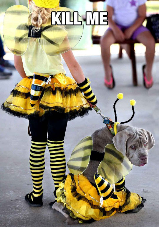 Dog In A Bee Cosplay