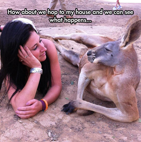 Suave Kangaroo Knows How To Charm A Lady