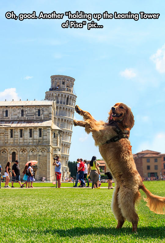 Tourist Dog Goes To Italy