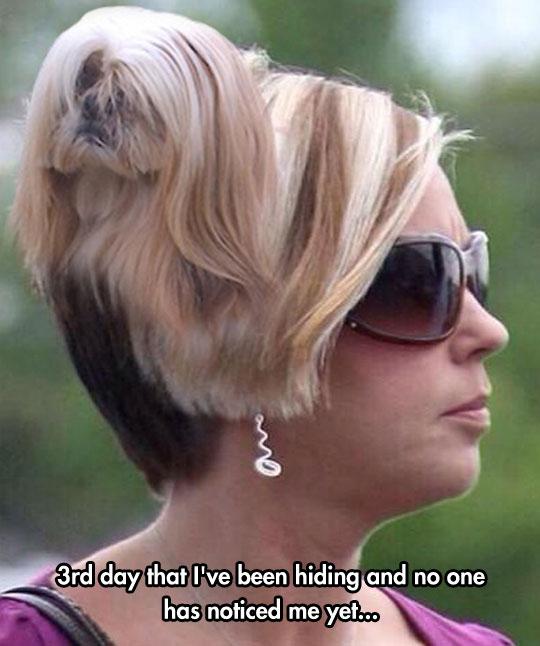 Modern Mom Haircuts