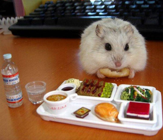 funny-hamster-eating-lunch-water
