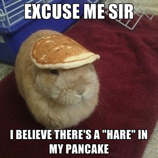 funny-hare-pancake-head-hat