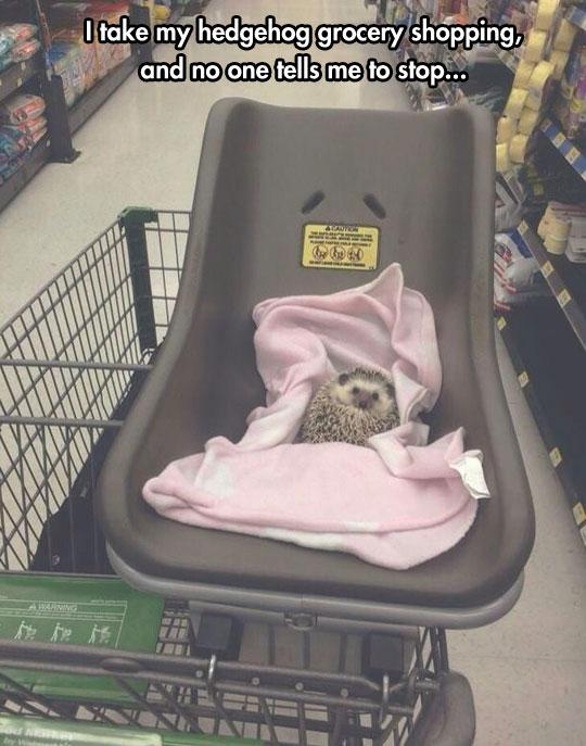 The Tough Hedgehog Life