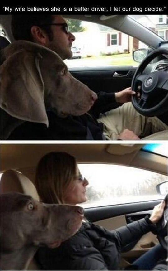 funny-husband-wife-best-driver-dog-car