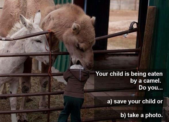 funny-kid-camel-eating-head