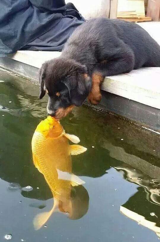 funny-kiss-puppy-fish-lake