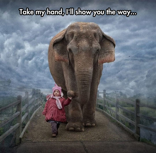 funny-little-kid-elephant-crossing-bridge